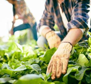 Community Garden Vouchers